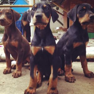 Would you lik a puppy? We have 10 of them!